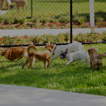 Large Dog Park at Haxton Apartments